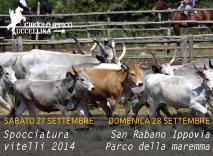 Spocciatura dei vitelli e Ippovia San Rabano